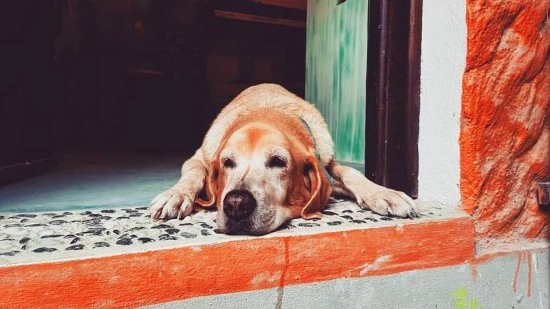 Tribu Hostel: Mango (Mangolino), the sweetest coolest hostel dog ever!