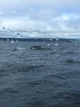 Bay Bulls, Kanada: Being outside would provide better photos of the whales; this was taken through a window.