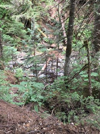 Snoqualmie Pass, WA: photo3.jpg