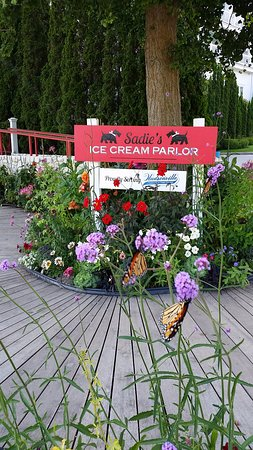 Sadie's Ice Cream Parlor: Butterflies and the sign
