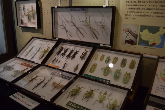 Kumakogen-cho, Japan: いろんな大きな昆虫がいます