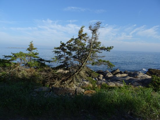 Port Clyde, Мэн: More spruce