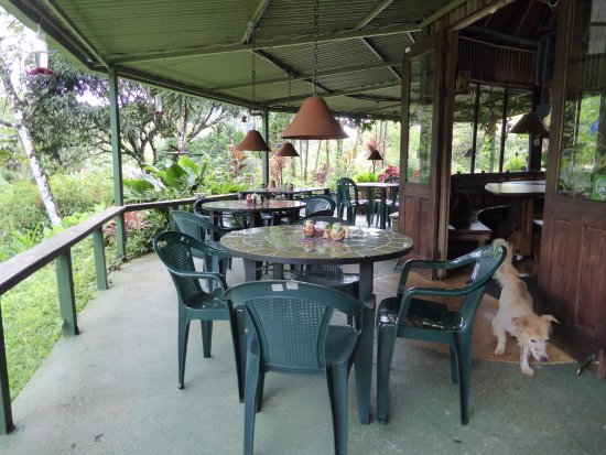 Nuevo Arenal, Costa Rica: Our dog getting in the act