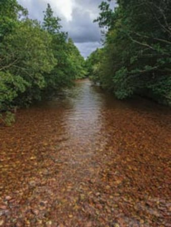 Aviemore, UK: River Druie, Rothiemurchus