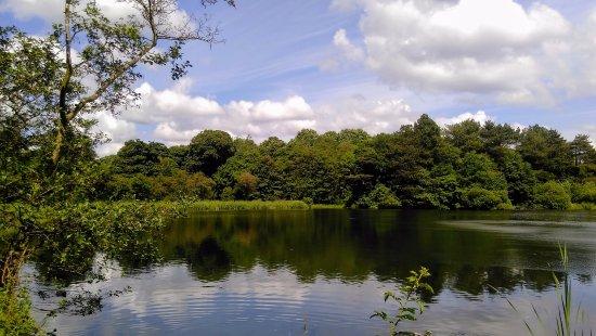 Престон, UK: Lake at Cuerden Valley
