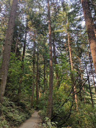 Troutdale, OR: Forest along the way