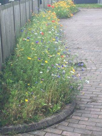 Wrexham, UK: Wildflower borders near the museum