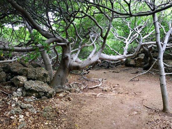 Shete Boka National Park: photo0.jpg