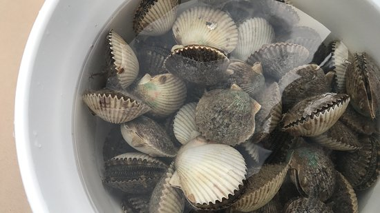 Homosassa, FL: Bucket of Scallops