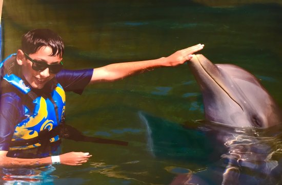 """Dolphin Discovery Tortola: """"Hand touch"""""""