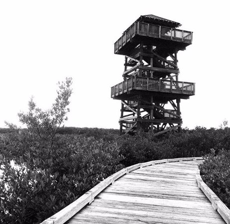 Robinson Nature Preserve : Overlook tower, and the boardwalk towards it.