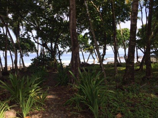 Pavones, Costa Rica: beach across the street