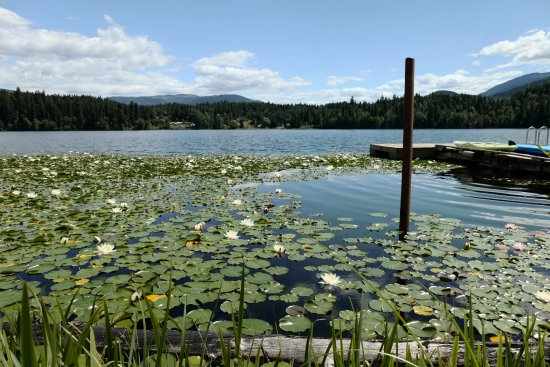 The Painted Turtle Restaurant : Serene environment at lake side