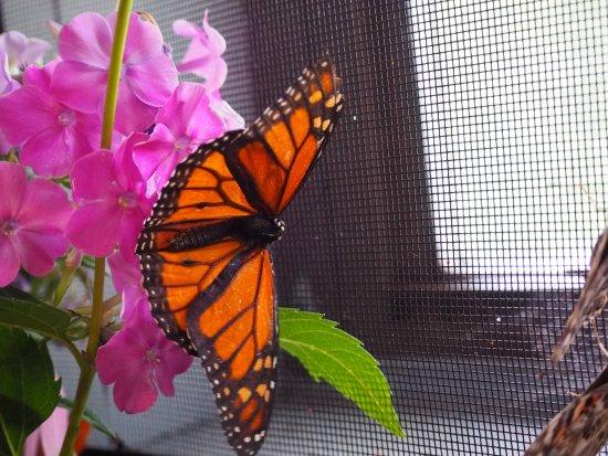 Jim Thorpe, เพนซิลเวเนีย: Butterfly