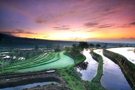 Baturiti, Indonesia: Surrounding Area Jatiluwih