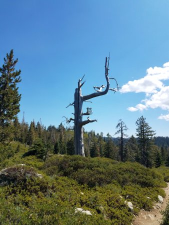 Graeagle, CA: Scenery along the trail