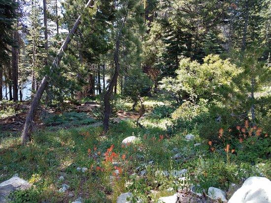 Graeagle, Californien: Scenery along the trail