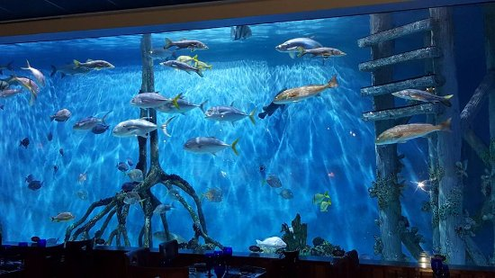 Rumfish Grill 33 500 Gallon Aquarium Inside Dining Area