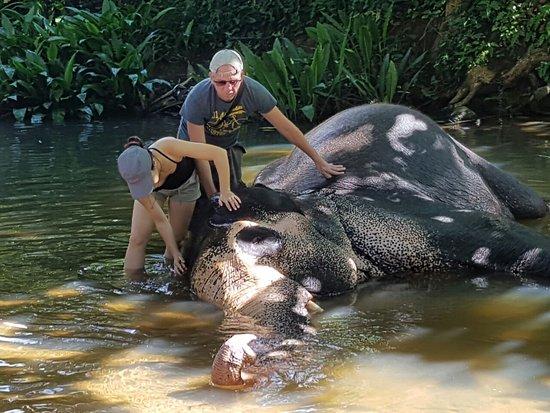Kegalle, Sri Lanka: Millennium Elephant Foundation (MEF)