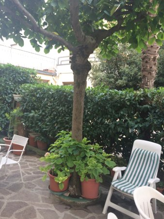 Hotel Garden 이미지