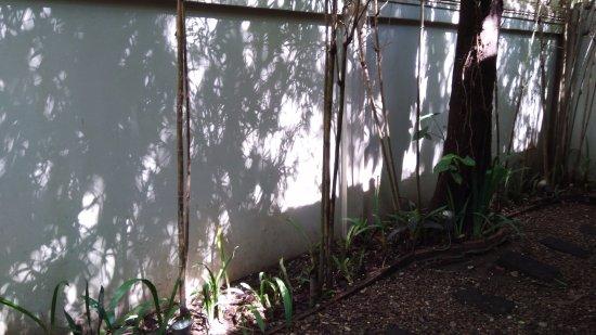 Heritage Suites Hotel: wall garden of the room