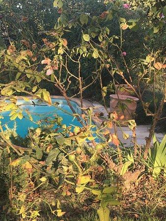 Seguret, Frankreich: Onderhoud tuin