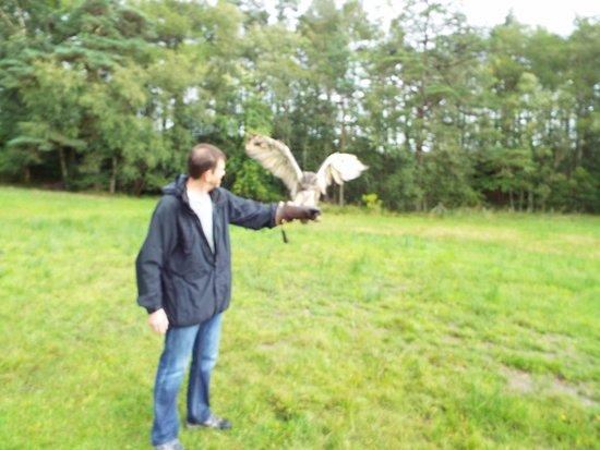 Strathblane, UK: The eagle (owl) has landed!