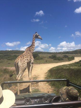 Albertina, South Africa: Garden route game lodge