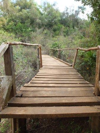 Oloolua Nature Trail: wooden bridge