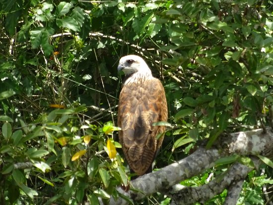 Distretto del Belize, Belize: photo2.jpg