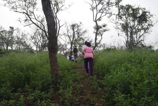 Mohali, อินเดีย: the jungle walk
