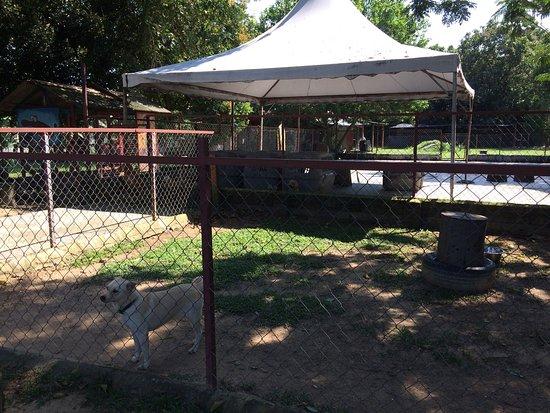 PD Ostrich Show Farm: photo6.jpg