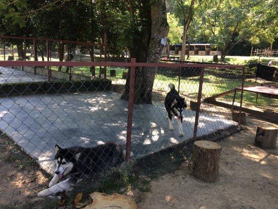 PD Ostrich Show Farm: photo7.jpg