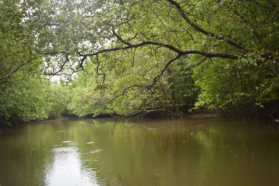 Pantai Cenang, Malaysia: Tour at Mangrove Trees