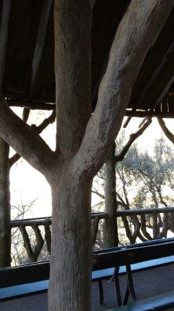 Launceston, Australia: Concrete tree shelter
