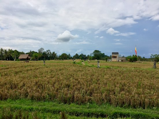 The Chedi Club Tanah Gajah, Ubud, Bali – a GHM hotel: View at Breakfast from the Restaurant