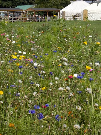 Great Missenden, UK: Beautiful location with stunning wild flower area and opportunities to pick a variety of produce