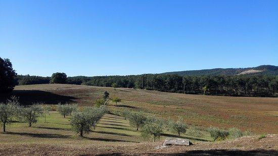 Agriturismo Natura e Salute: IMG_20170814_085502_large.jpg