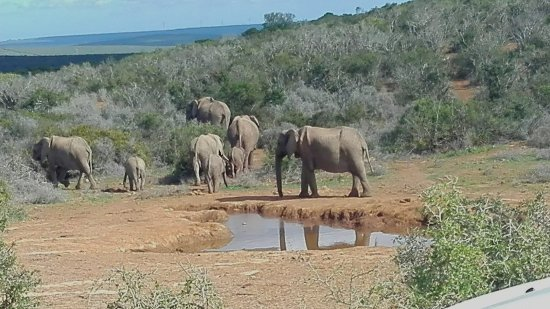 Addo Elephant National Park, Sudáfrica: At the watering hole