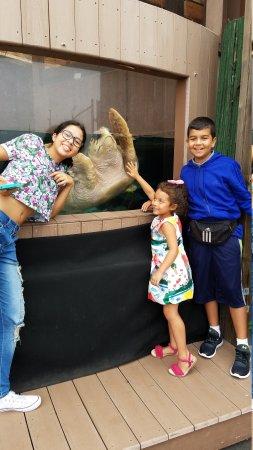 The Maritime Aquarium: 20170814_155443_large.jpg