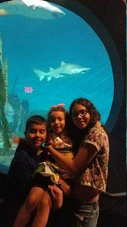 The Maritime Aquarium: 20170814_143037_large.jpg