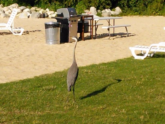 Clearwater Lakeshore Motel: Occasional Visitors