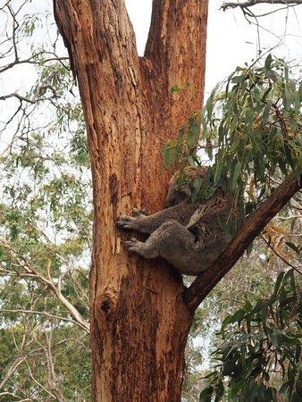 Cowes, Australien: photo4.jpg