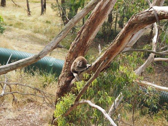 Cowes, Australien: photo5.jpg