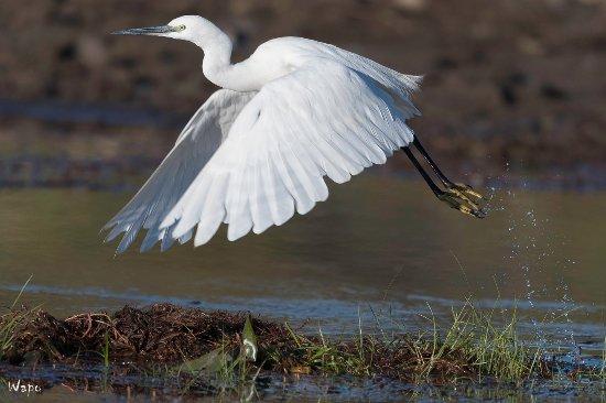 Rundu, Namibia: Heel wat vogelsoorten tijdens de boottocht (kleine zilverreiger)