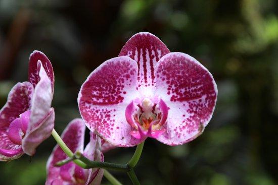Papaikou, HI: Hawaii Tropical Botanical Garden