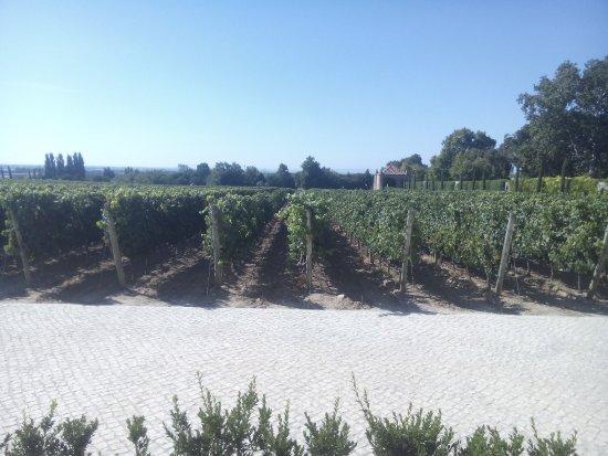 Vila Nogueira de Azeitao, Португалия: Vinhas do Palácio