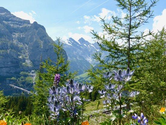 Hotel Jungfrau Wengernalp: View from Wengeneralp Hotel.