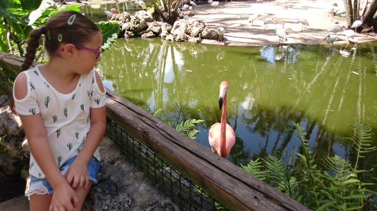 Davie, FL: Que bellos flamingos