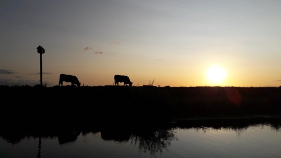 Newenden, UK: Cows at sunset